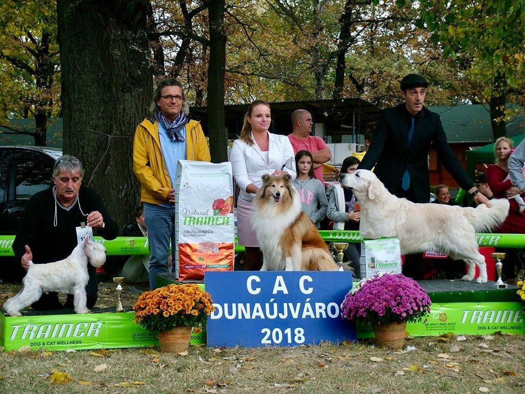 Dunaújváros CAC, BOS, és Veteran Best In Show