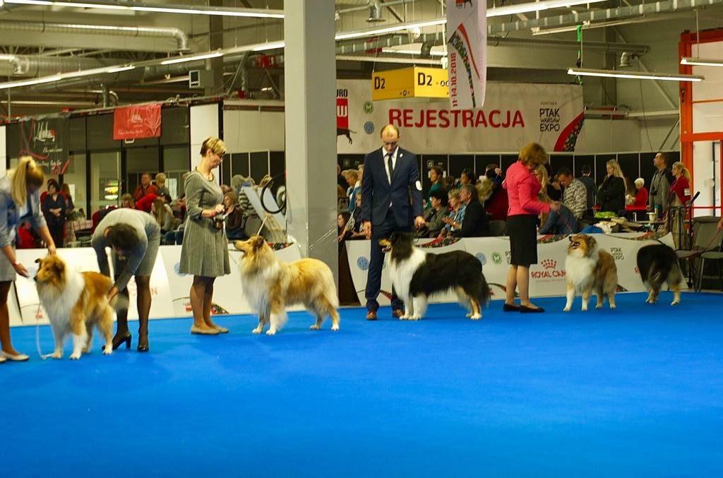 European Dog Show Warsaw