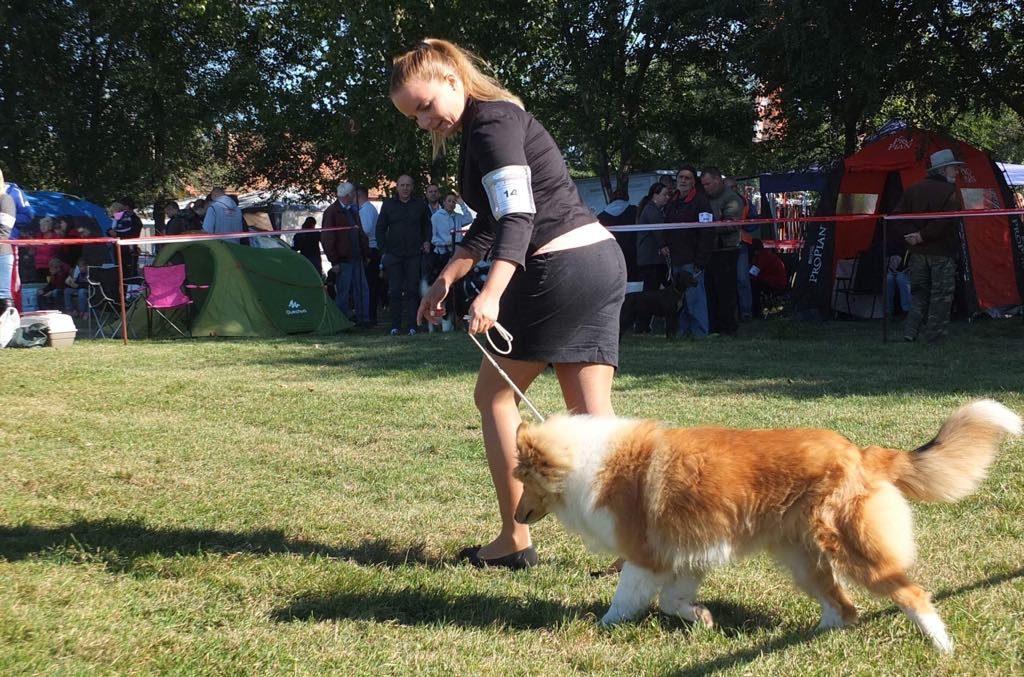 Győztes kutyák