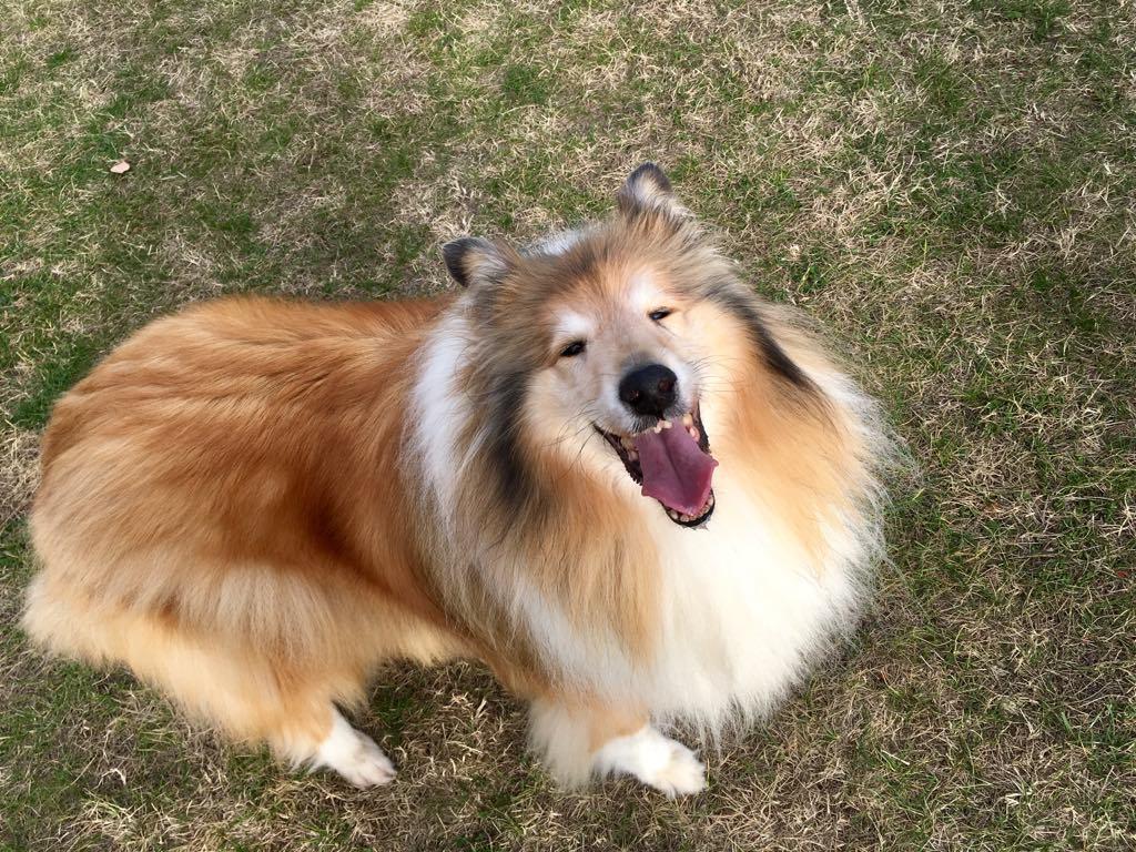 Mira Best Veteran kutya