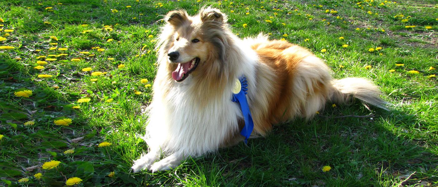 kutya fogápolás