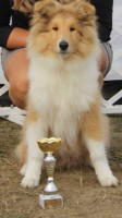 Komárom 2017 CACIB Baby Champion