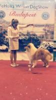 FEHOVA 2018 Hungaian Puppy Grand Winner